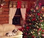 Christmas-Riva-2015-640p.jpg